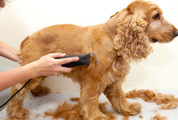 Cele mai bune tăietoare pentru câini