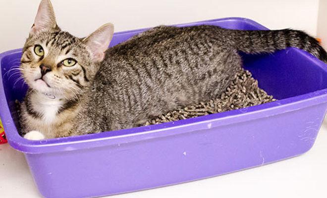 Cele mai bune cosuri pentru gunoiul de pisici