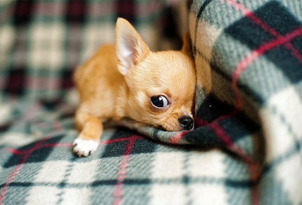 Cei mai buni câini pentru un apartament